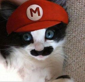 mario-cat
